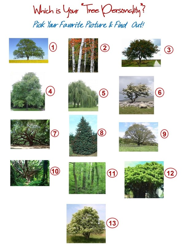 Choose a Tree Personality Quiz