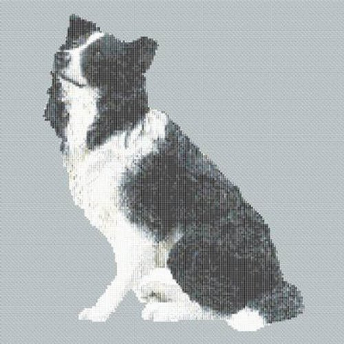 Border Collie Dog Cross Stitch Pattern