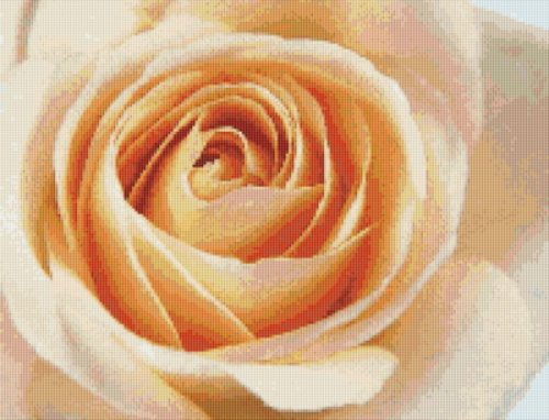 Single Ivory Rose Cross Stitch Pattern